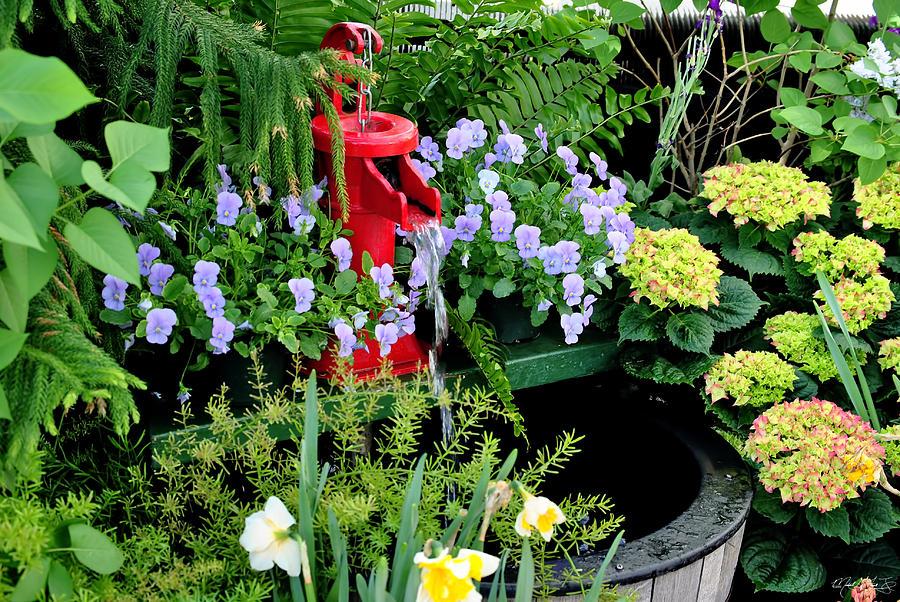 0021 Botanical Gardens Buffalo Ny Series Gardens Photograph