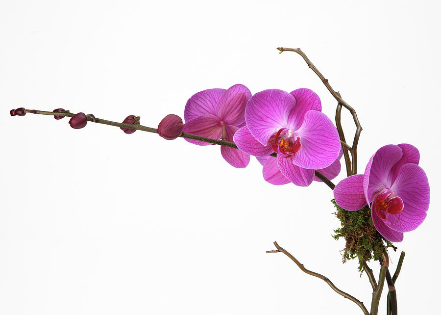 A Close-up Of An Orchid Branch Photograph