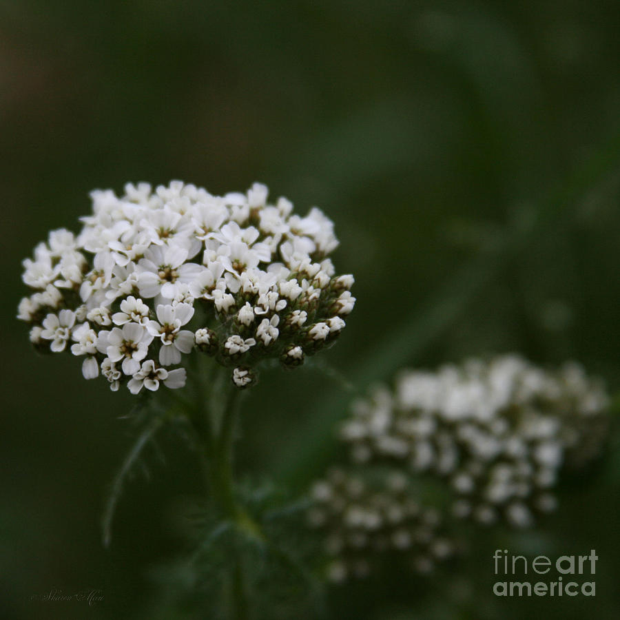A Little Stardust Photograph  - A Little Stardust Fine Art Print
