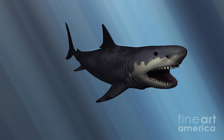 A Megalodon Shark From The Cenozoic Era Digital Art  - A Megalodon Shark From The Cenozoic Era Fine Art Print