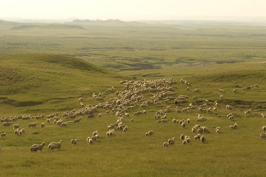 sheep ranch chat How to work ranch jobs  would you be willing to chat over a coffee sometime  sheep's wool is also sheared and processed on some ranches.