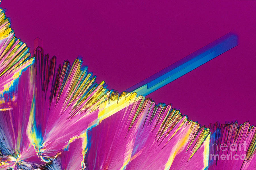 Adenosine Triphosphate Photograph