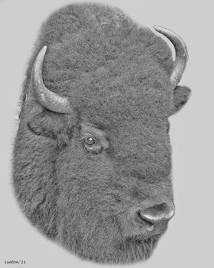 American Bison Digital Art