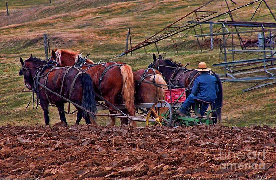 Amish Farming Photograph