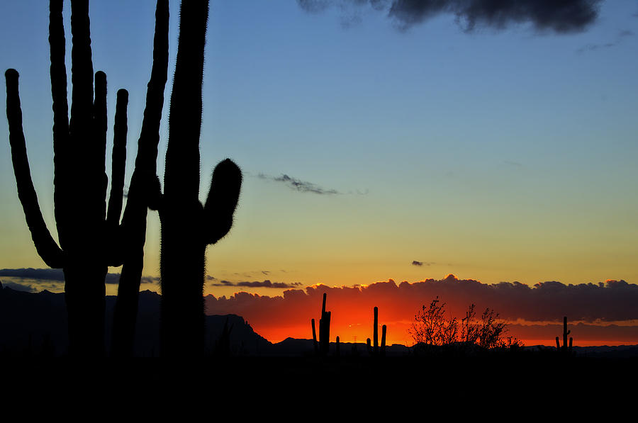 An Arizona Sunrise Photograph  - An Arizona Sunrise Fine Art Print