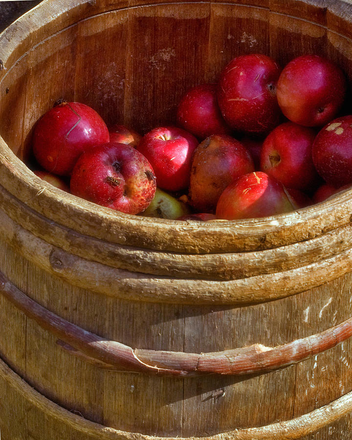 Apple Harvest Photograph  - Apple Harvest Fine Art Print