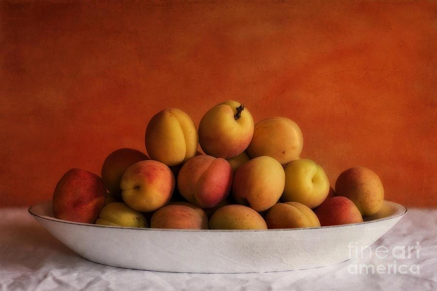 Apricot Delight Photograph