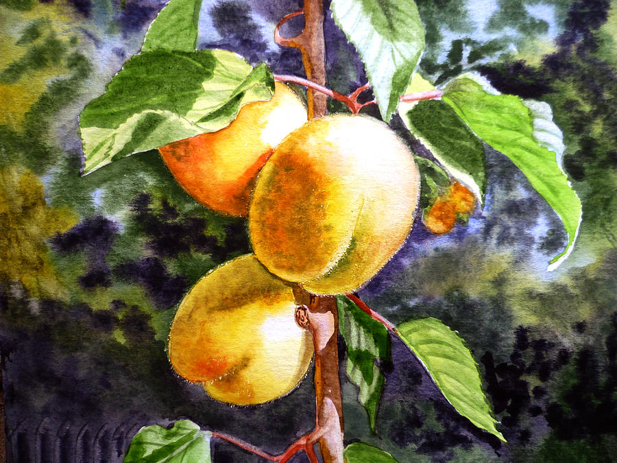 Apricots In The Garden Painting