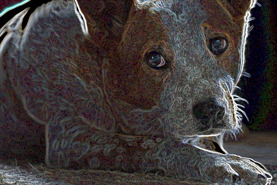 Australian Cattle Dog Photograph  - Australian Cattle Dog Fine Art Print