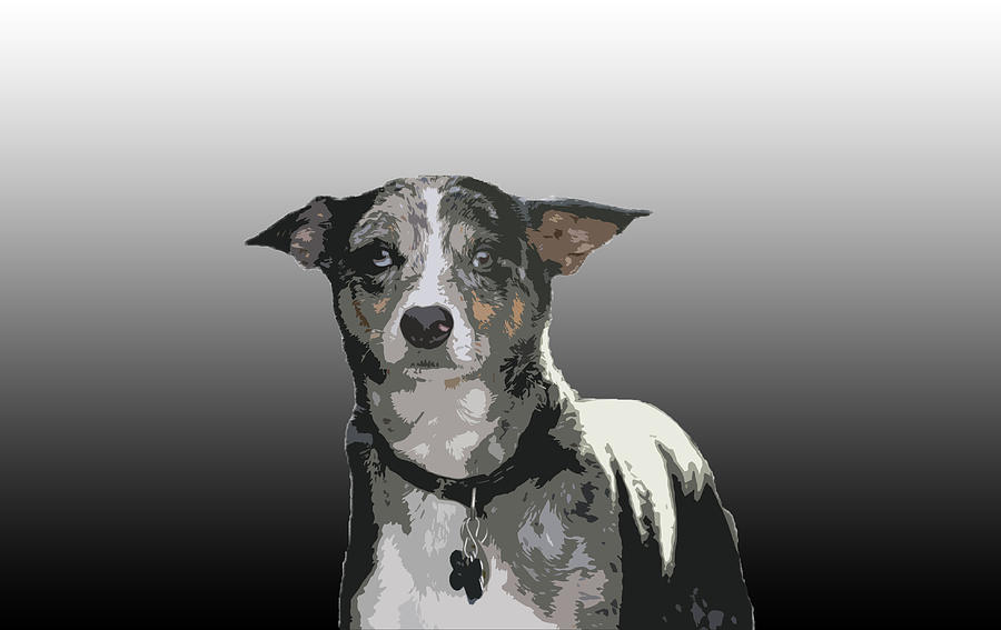Australian Cattle Dog Sheltie Mix Photograph