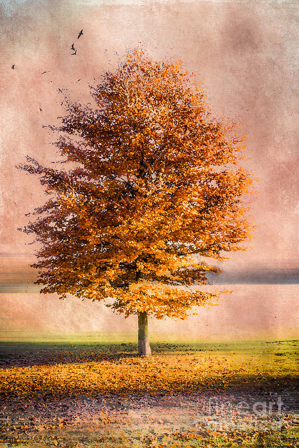Autumn Light Photograph  - Autumn Light Fine Art Print