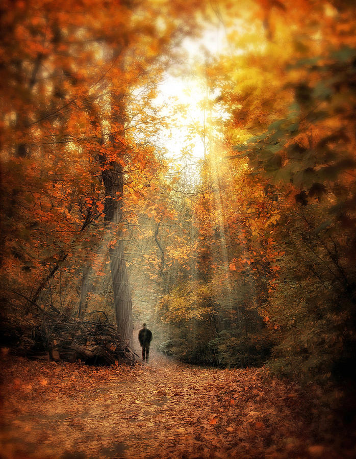 Autumn Meditation Photograph  - Autumn Meditation Fine Art Print