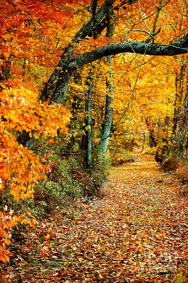 Autumn Pathway Photograph