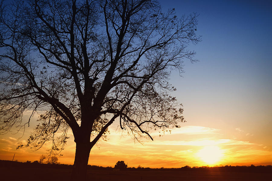 Bare Tree At Sunset Photograph