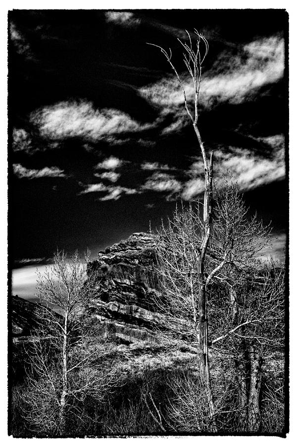 Bare Trees At Red Rocks Photograph