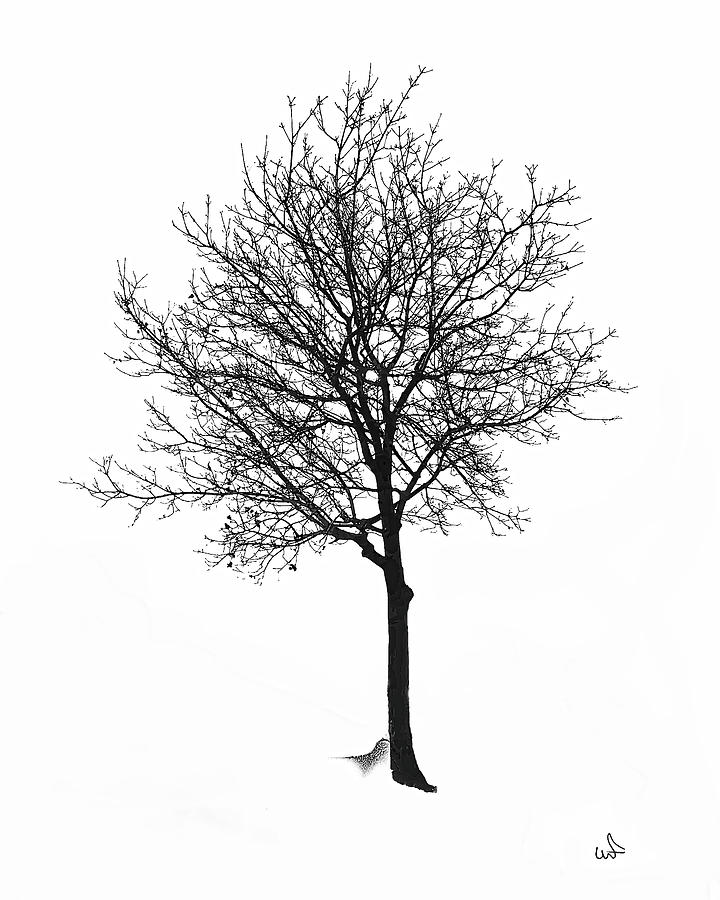 Bare Winter Tree Photograph