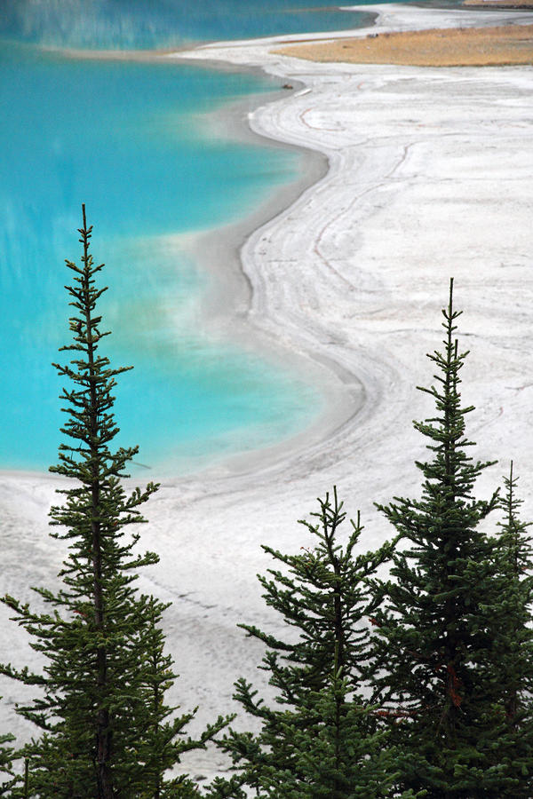 Beach At Lake Louise Banff National Park Photograph  - Beach At Lake Louise Banff National Park Fine Art Print