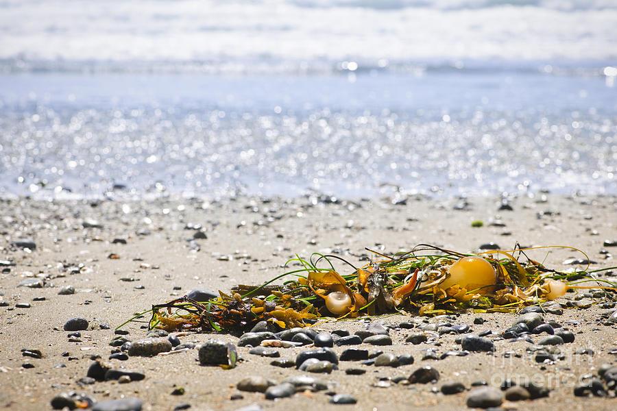 Beach Detail On Pacific Ocean Coast Photograph