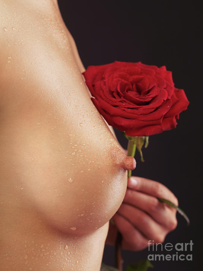 Beautiful Woman Breast And A Red Rose Photograph