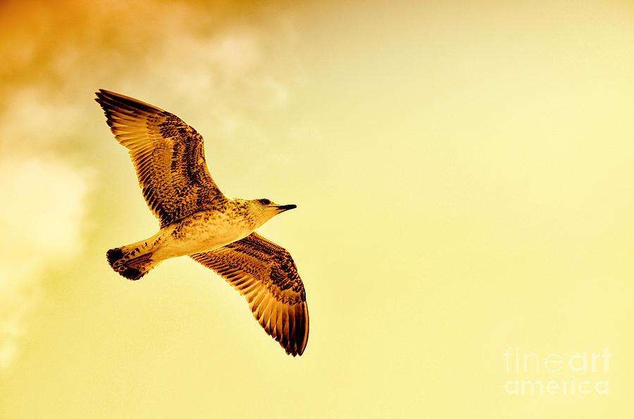 Bird Flight Photograph...