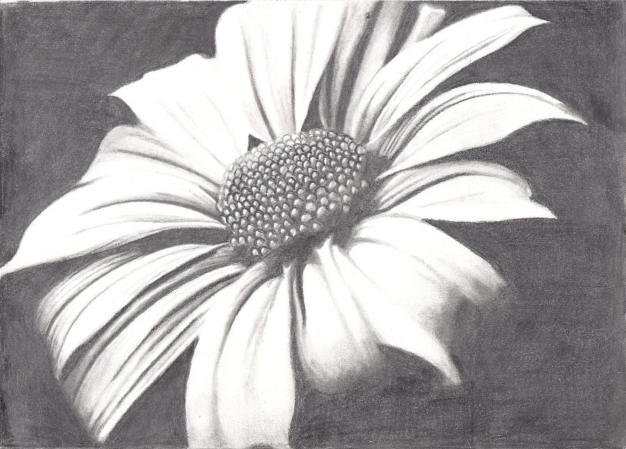 Black And White Flower Drawing  - Black And White Flower Fine Art Print