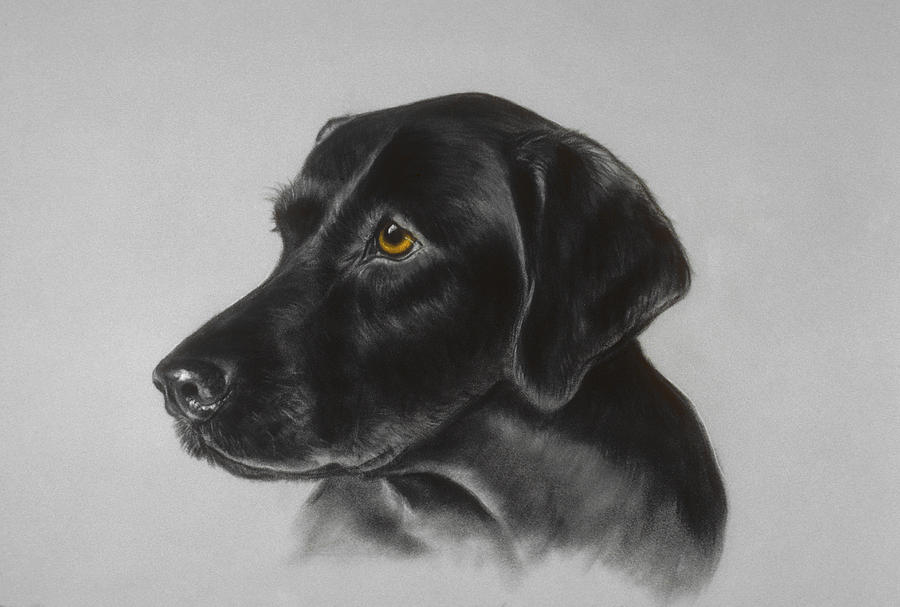 Dog Pastel - Black Labrador by Patricia Ivy