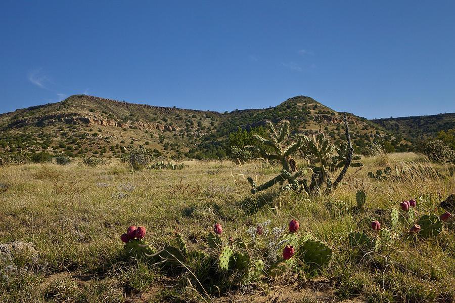 Black Mesa Cacti Pyrography