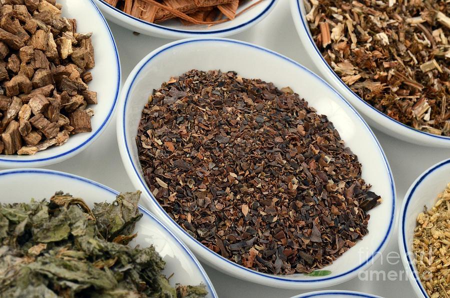 Bladderwrack Herb Photograph