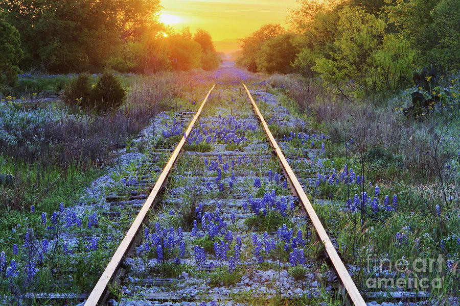 Blue Bonnets On Railroad Tracks Photograph