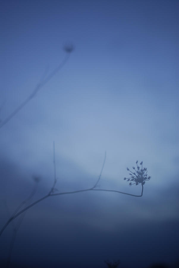 Blue Dream Photograph  - Blue Dream Fine Art Print