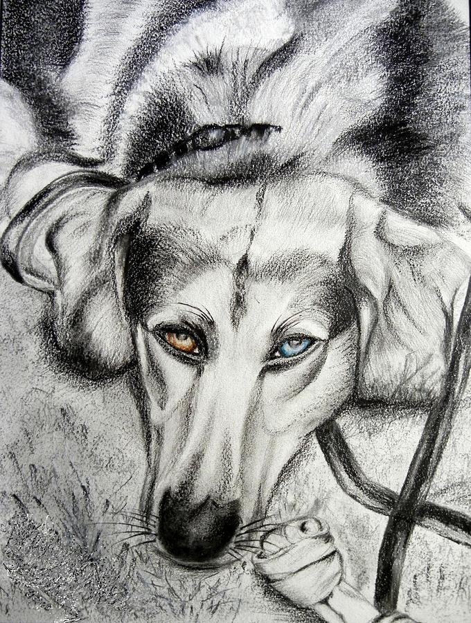 Blue Gaze Drawing  - Blue Gaze Fine Art Print