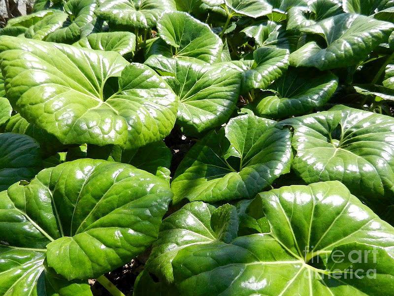 Bog Plants Photograph - Bog Plant Surprise by Randy Stewart