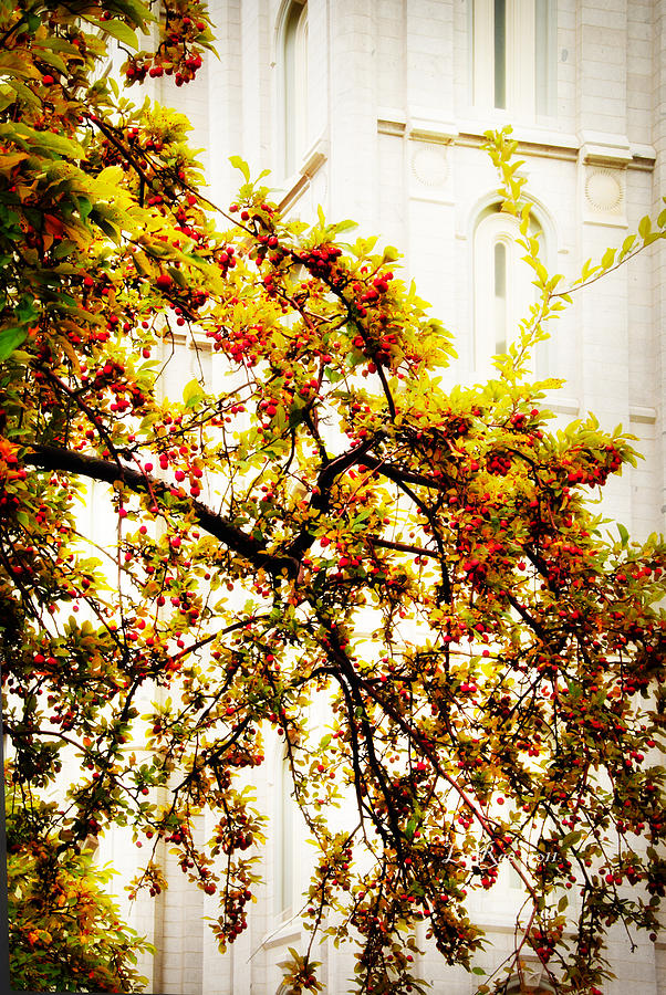 Branch Of Heaven Photograph  - Branch Of Heaven Fine Art Print