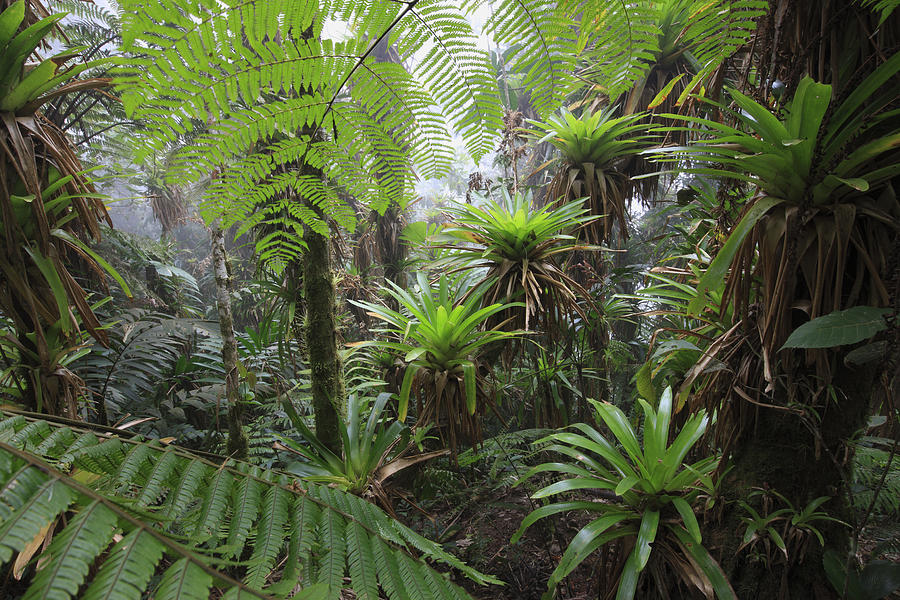 Mp Photograph - Bromeliad Bromeliaceae And Tree Fern by Cyril Ruoso