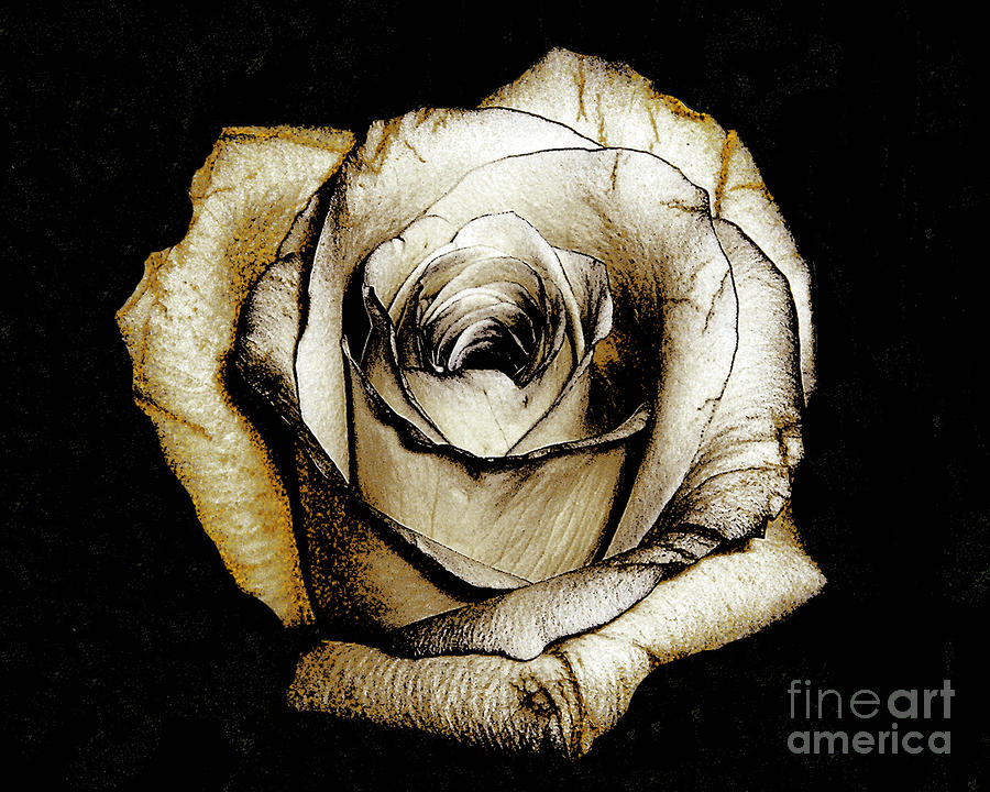 Brown Rose - Digital Painting Photograph  - Brown Rose - Digital Painting Fine Art Print