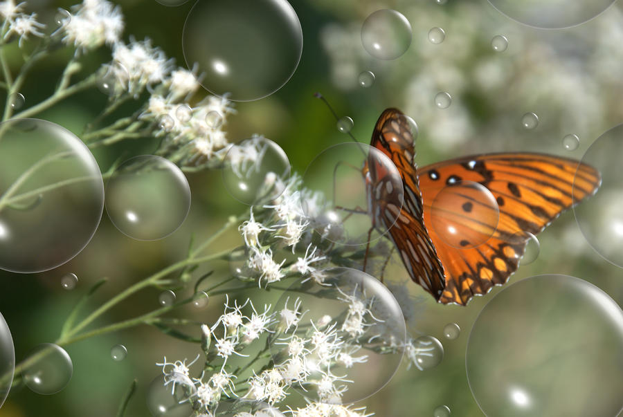 Bubble Fly Photograph