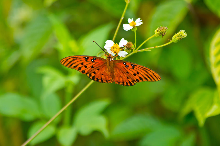 Butterfly Photograph - Butterfly by Wild Expressions Photography