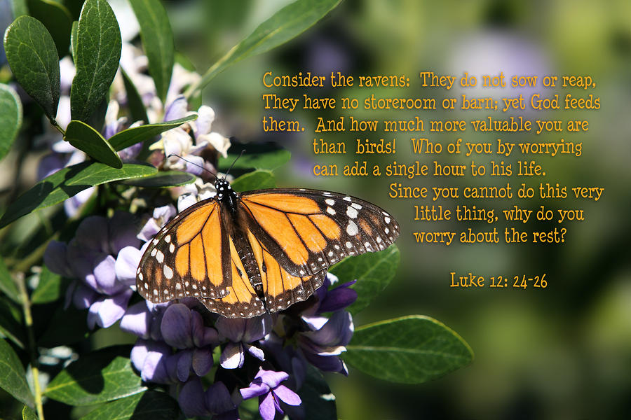 Butterfly With Scripture Photograph  - Butterfly With Scripture Fine Art Print