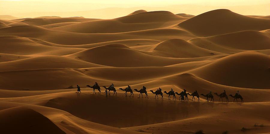 Camel Caravan In The Erg Chebbi Southern Morocco Photograph