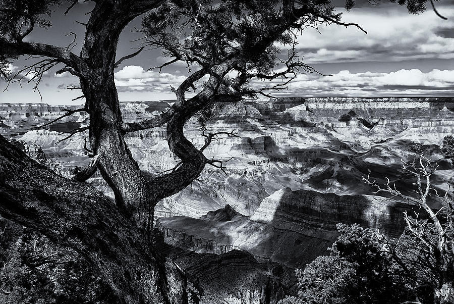 Canyon Tree Photograph  - Canyon Tree Fine Art Print