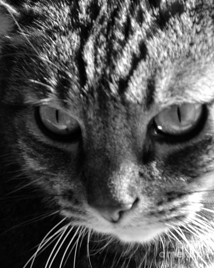 Cats Eyes Photograph  - Cats Eyes Fine Art Print