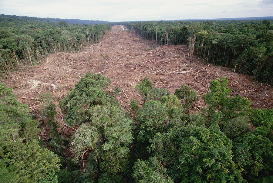 Clearing Of Tropical Rainforest South is a photograph by Gerry Ellis ...