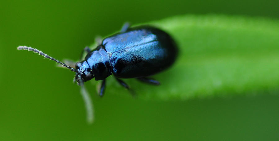 Close Up Of A Beetle Photograph