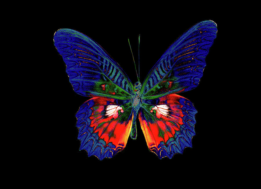Colorful Butterfly Designs Design