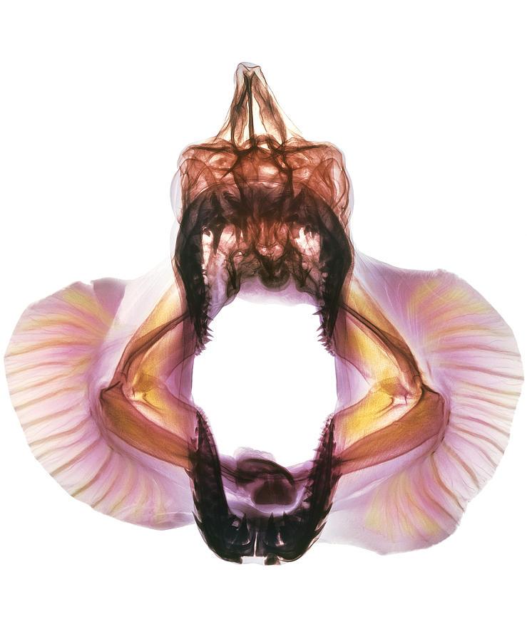 x Ray Shark Coloured x Ray of Skull of a