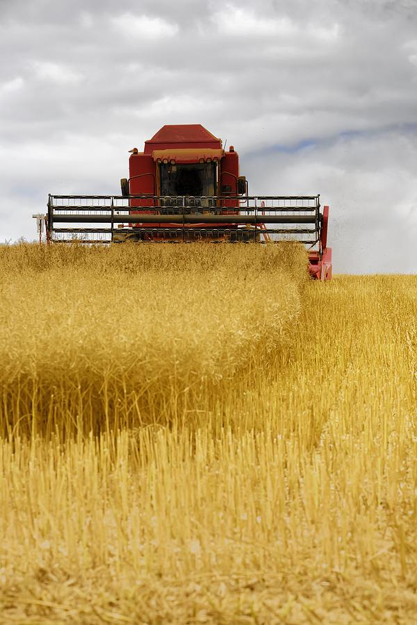 Combine Harvester, North Yorkshire Photograph  - Combine Harvester, North Yorkshire Fine Art Print