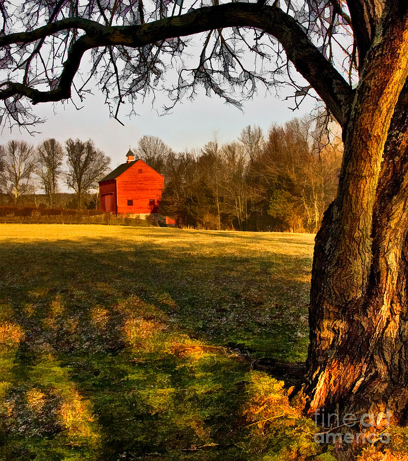 Country Life Photograph  - Country Life Fine Art Print