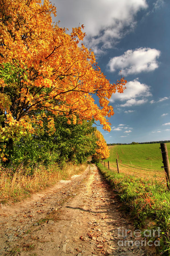 Country Road And Autumn Landscape Photograph  - Country Road And Autumn Landscape Fine Art Print