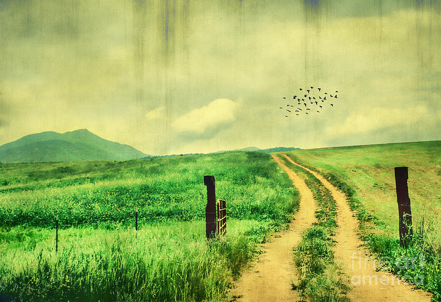 Country Roads Photograph  - Country Roads Fine Art Print
