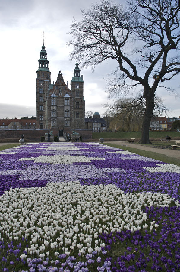 Denmark, Copenhagen Crocus Bloom Photograph
